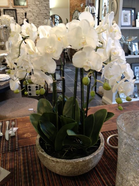 Orchid Love Orchids Flowers Interiors Beautiful Flowers