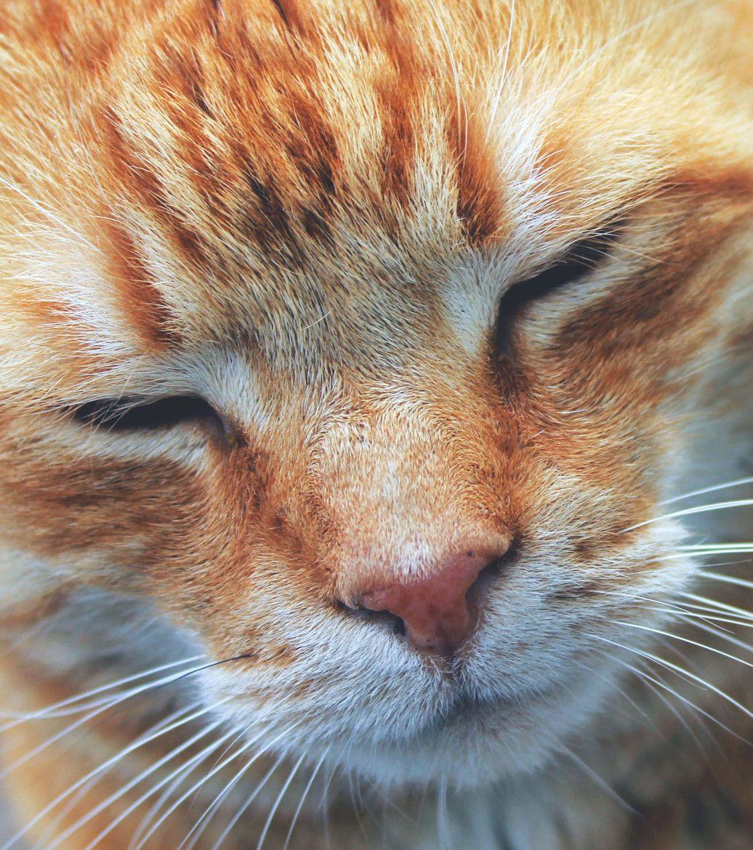 Zzzzzzzzzzzzzzzzzzzzzzzzzzzzzzzzzzzzzzzzzzzzzz Cats Cat Feline