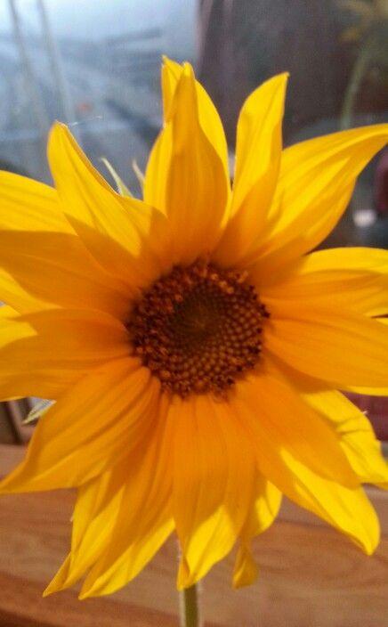 Sara baby's sunflower ♡ mom