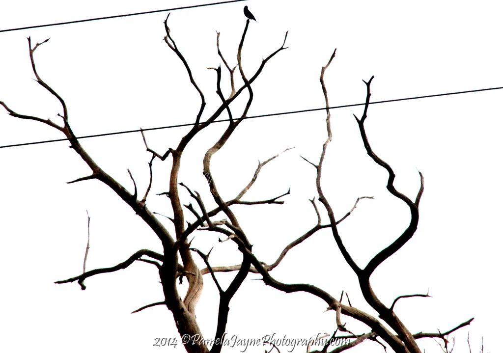 Lonesome December '14 https://www.facebook.com/PamelaJaynePhotography