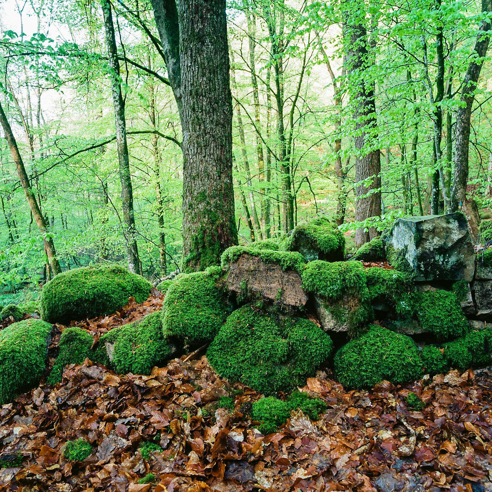Skaralid Soderasen Nationalpark Sweden Sverige Platser Skanor