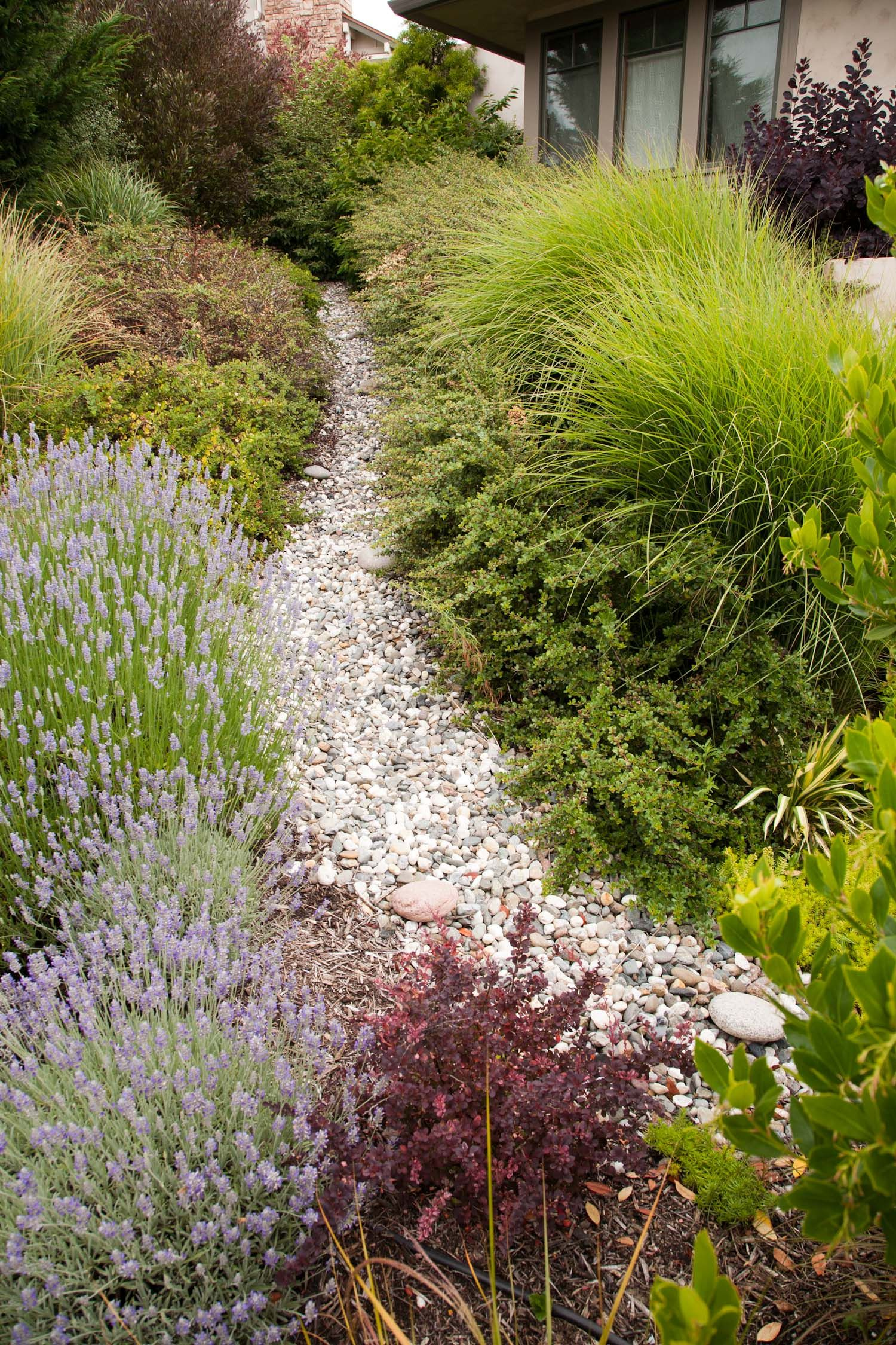 a dry creek bed in the front yard helps direct rain water and