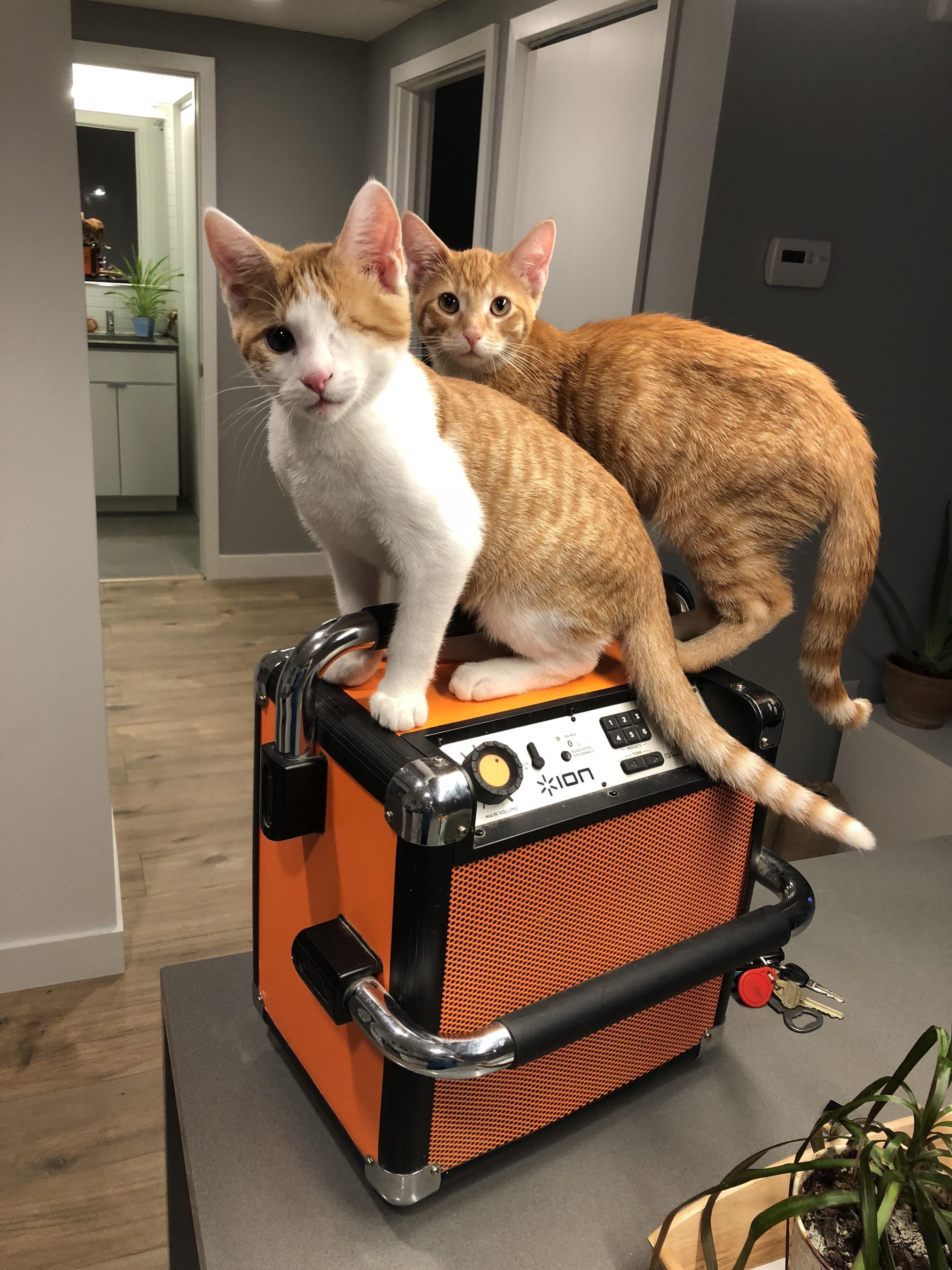 Dont Forget The Beats My Dudes 1eyedwillichestercopperpot Katzen