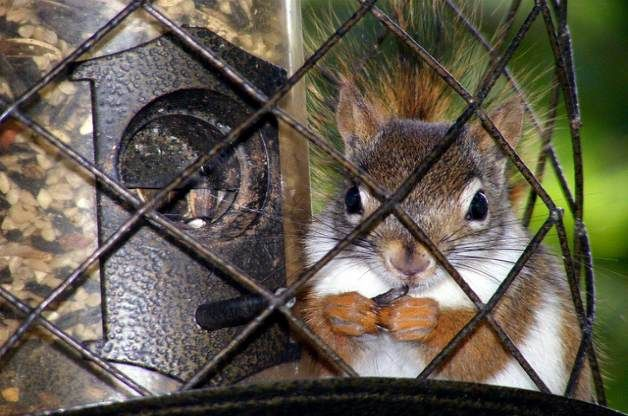 Feeding birds by keeping squirrels away gardening bird - How to keep squirrels away from garden ...