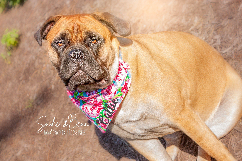 personalized monogram Bandana fall Plaid Dog Bandana Dog Scarf cat bandana blue Bandana custom collar dog bandana Embroidered