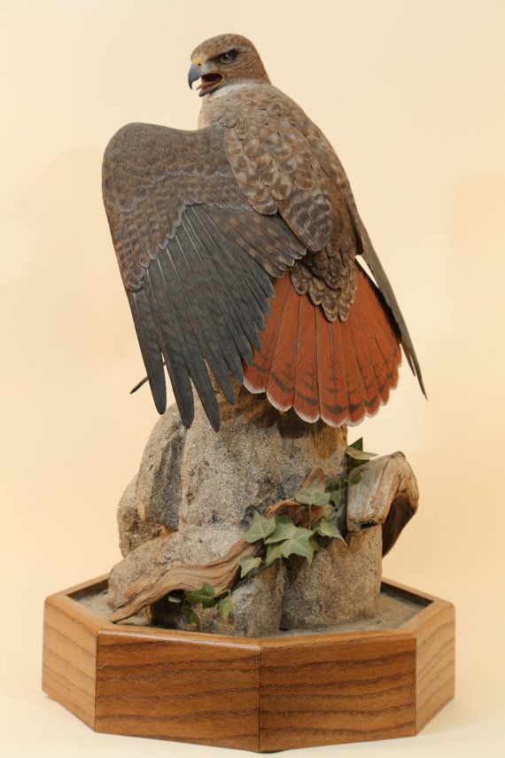 Red tailed hawk wood carving acrylics awesome and overalls