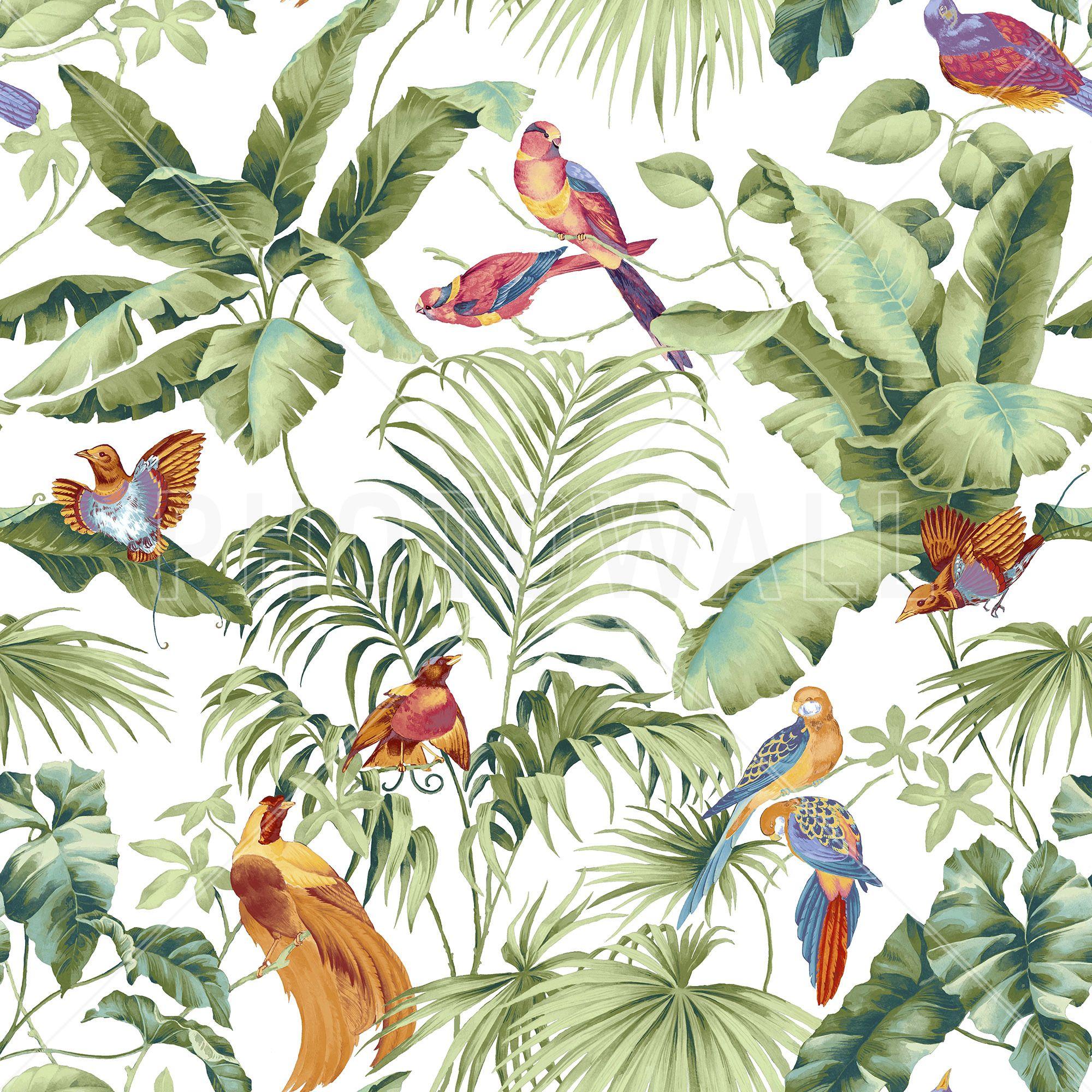 Behang Kinderkamer Jungle.Fotobehang Jungle Junglefotobehang Hash Tags Deskgram