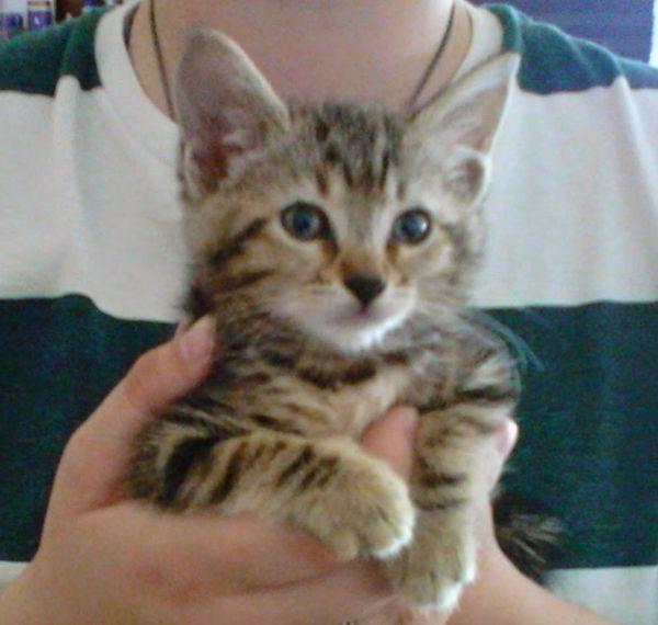 Kyara Tiny Heart Melter With Images Tiny Heart Animal Rescue