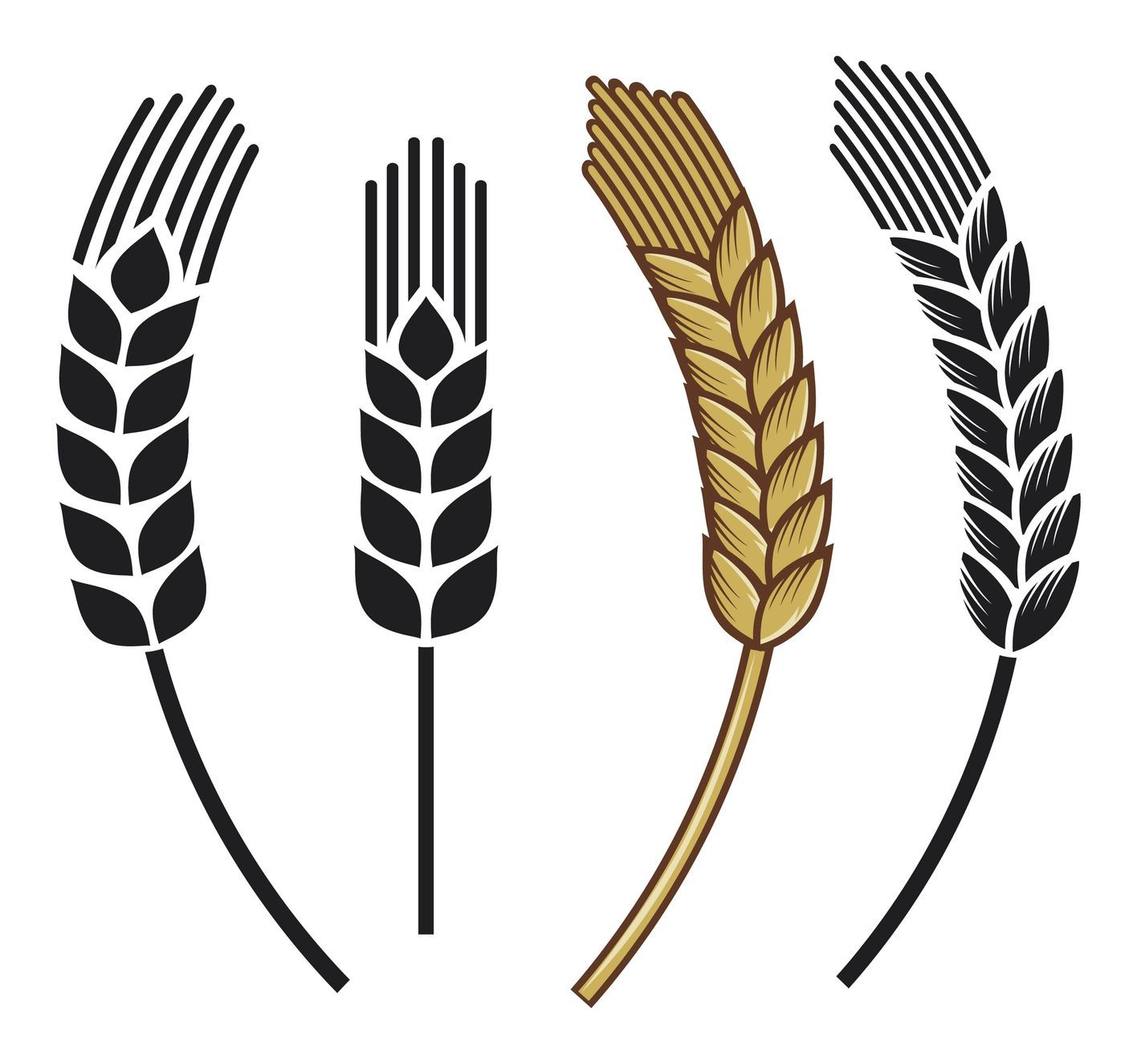 Defining Gluten Sensitivity Icon set, Wheat vector