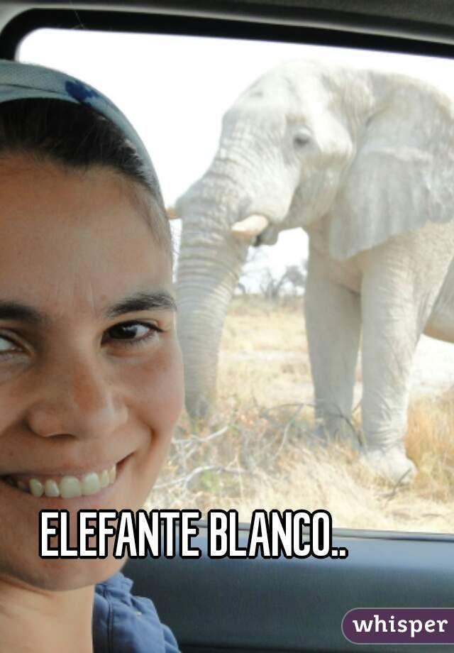 ELEFANTE BLANCO..