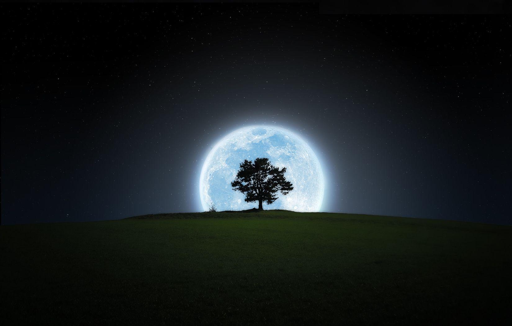 Earth Moon Silhouette Night Tree Wallpaper Background Images Wallpapers Wallpaper Backgrounds Background Images Hd wallpaper trees silhouette night moon