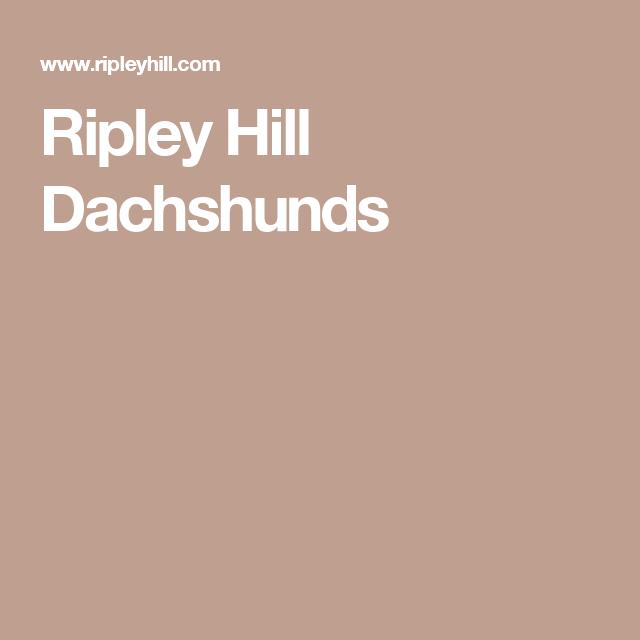 Ripley Hill Dachshunds Mini Dachshund Dachshund Ripley