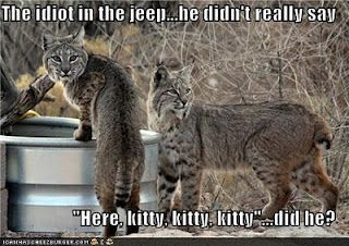 End o' Week Musings | Funny animal memes, Cute animals, Funny animals