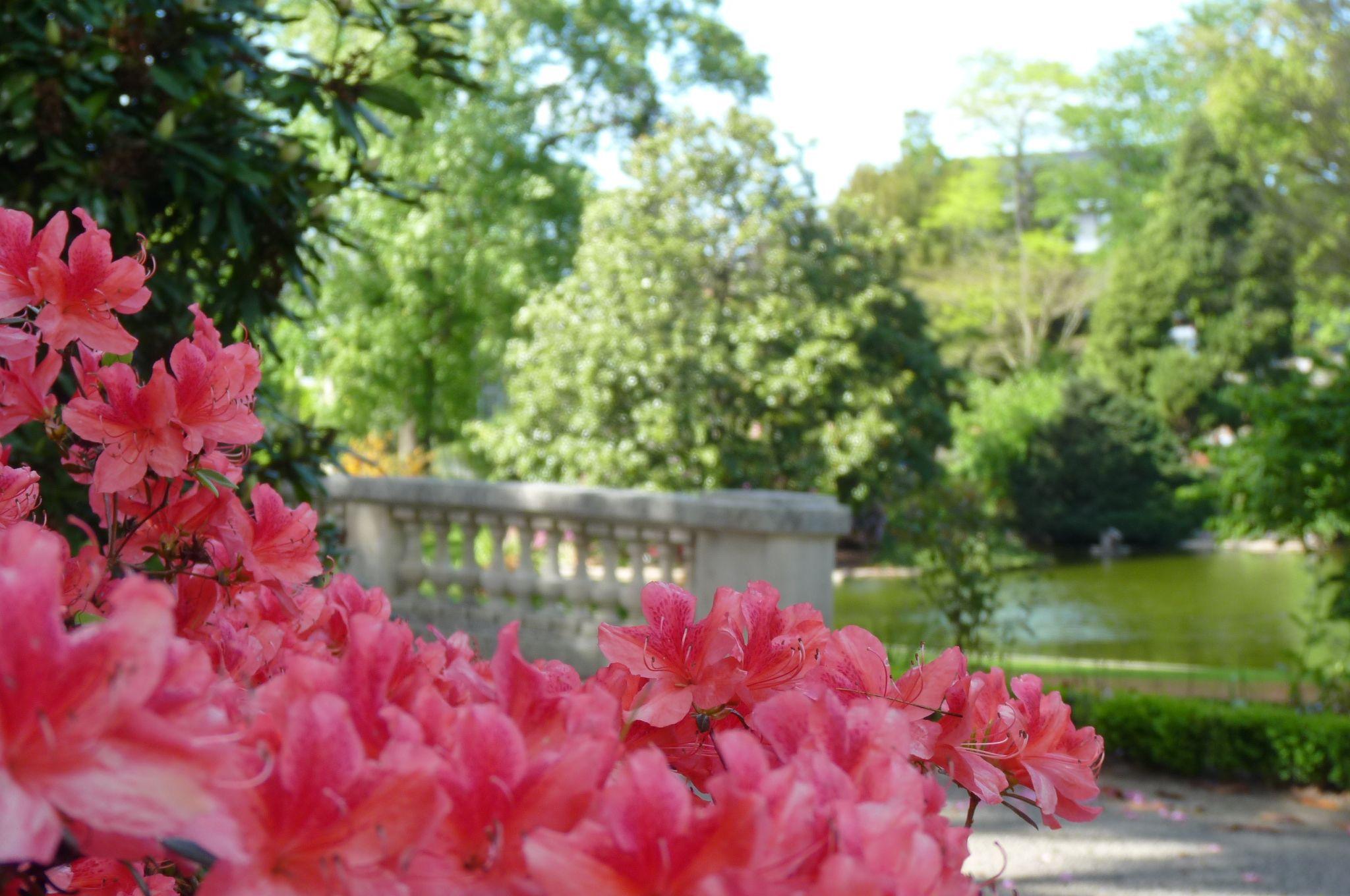 Visite Du Jardin Des Plantes Avec Animation Nature Angers Avec Images Plante Jardin Plante Jardins