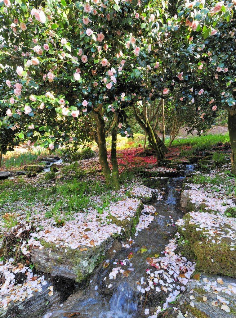 Jardin romantique de Trévarez