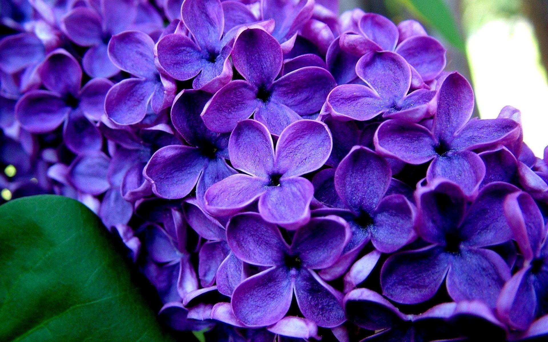 Purple Flower With Yellow Center Hd Desktop Wallpaper Widescreen