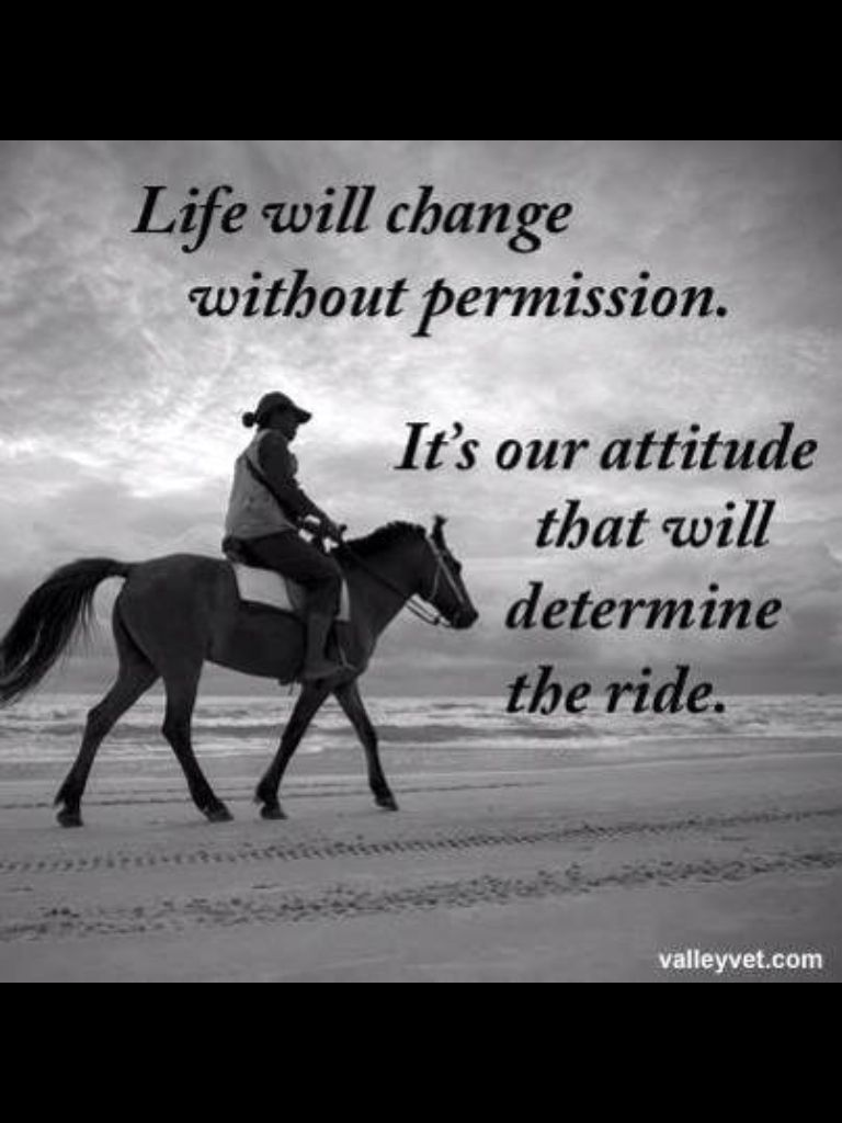 Check your attitude Horse quotes funny, Morning