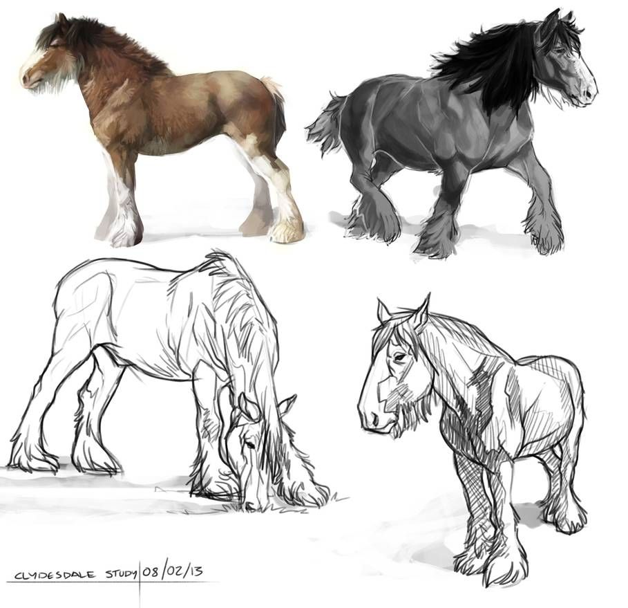 Clydesdale Study By Bearlyfeline On Deviantart Horse Sketch Horse Drawings Clydesdale [ 879 x 909 Pixel ]