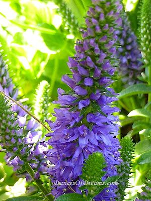 A Different Type Of Purple Flower Stalks Types Of Purple Flowers Purple Flowers Flowers