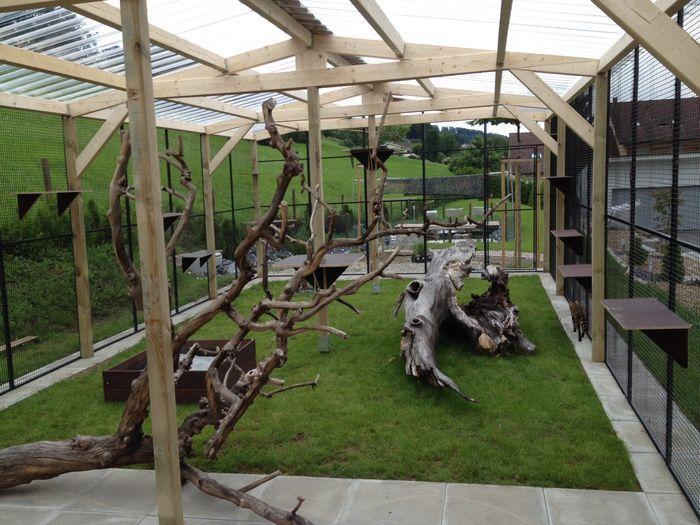 Karma Enclosure Serval cats, Cat enclosure