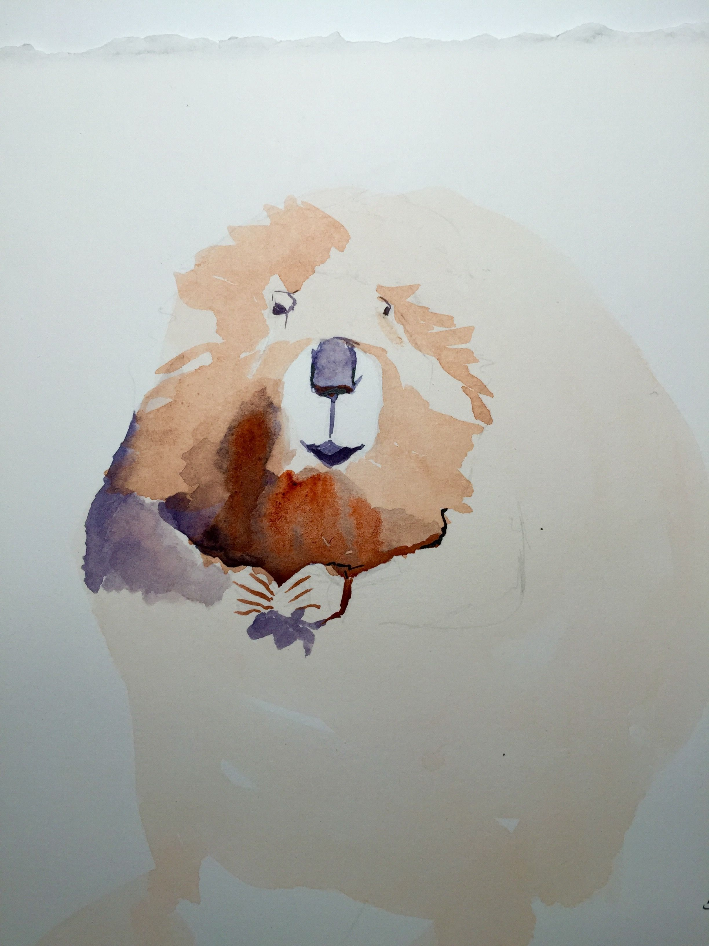 This is the start of an illustration of the Beaver for the Fable ...