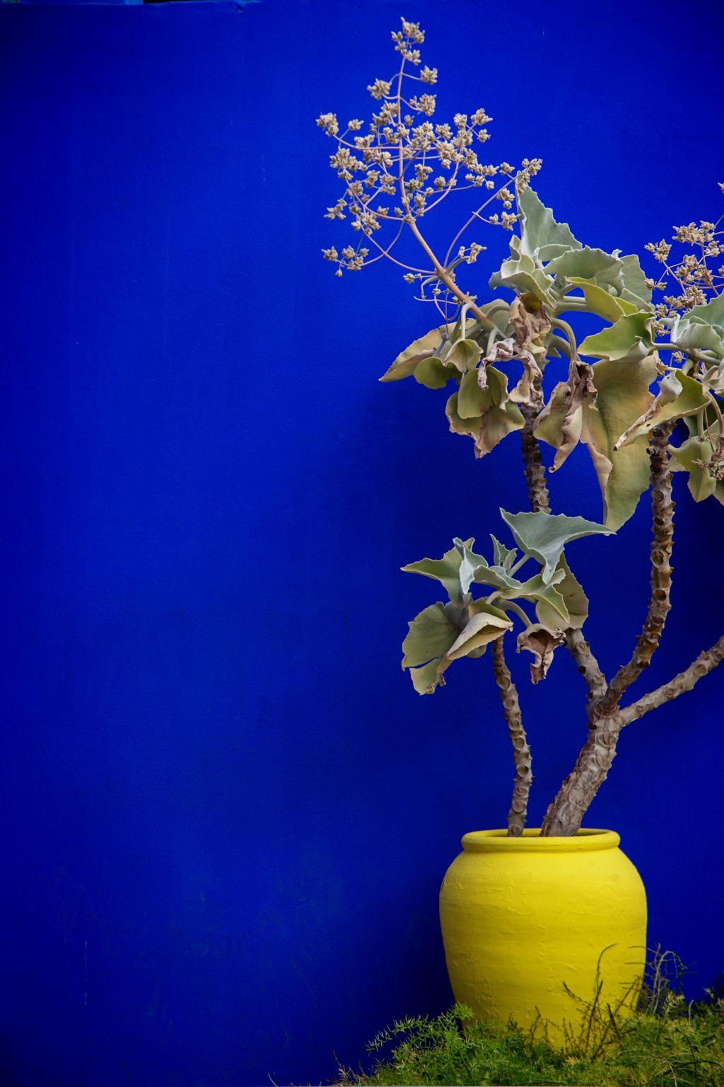 The Famous Majorelle Blue Of The Majorelle Gardenmarrakech