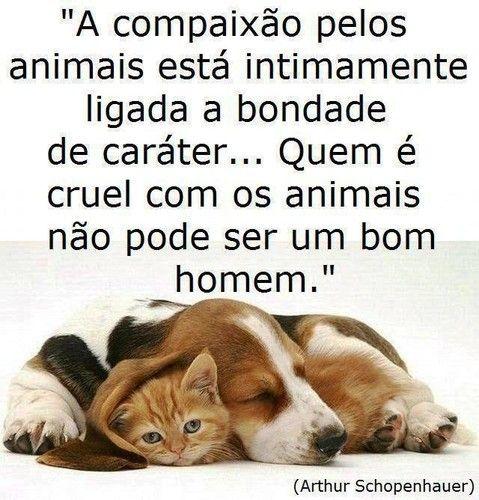 Oração São Francisco Assis Pelos Animais Frases Pets Dogs E Animals
