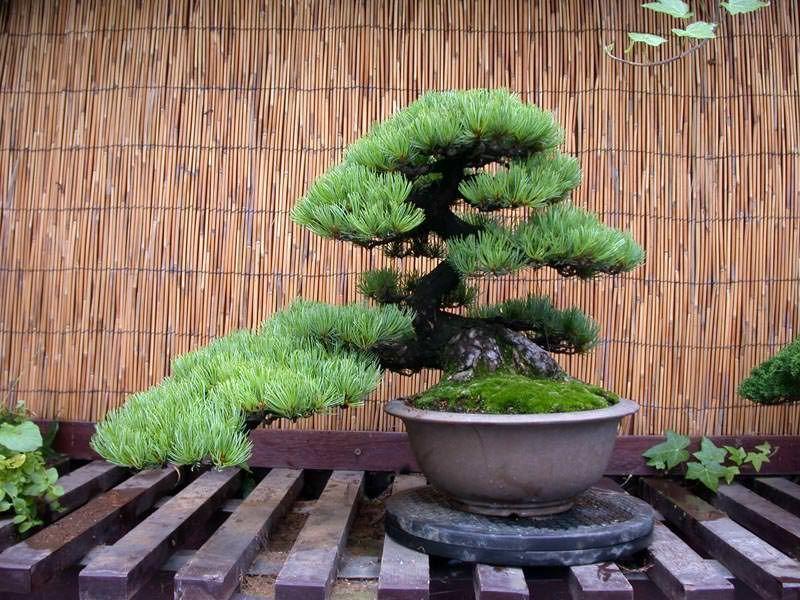 выращивание деревьев из семян в домашних условиях