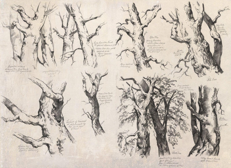 ArtStation - Tree & Foliage Studies, René Aigner