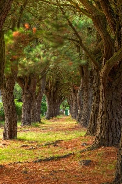 Pine Tree Trail - HDR