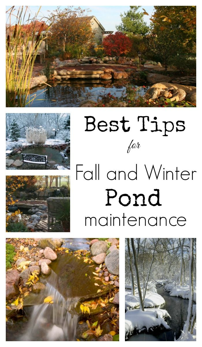 our best tips for fall and winter pond maintenance pond