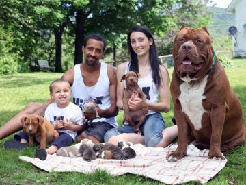 Pin By Walker On Animals Pets Pinterest Animal - The worlds biggest pit bull just became a dad wait until you see his puppies