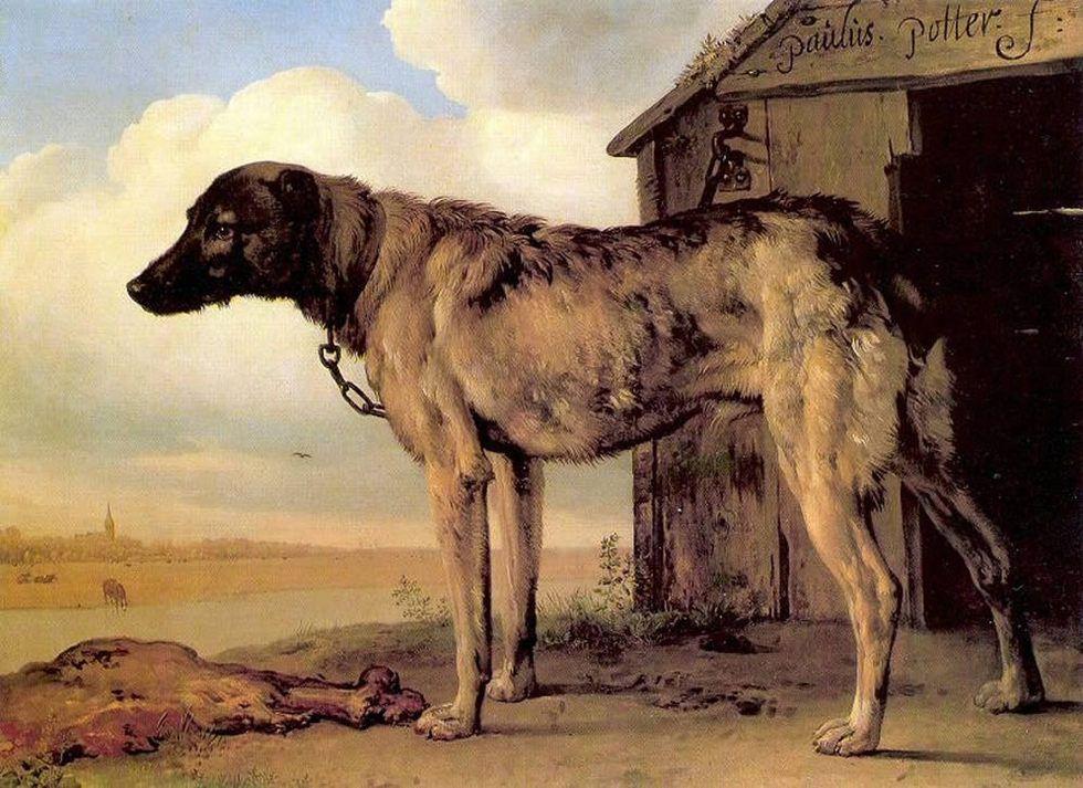 Perro guardián Paulus Potter era el pintor de los animales, como recuerda el director adjunto Gabriele Finaldi. Famoso por sus vacas, el Prado se ha traído un enigmático perro, que representaba al del mecenas del artista, Dirk Tulp.