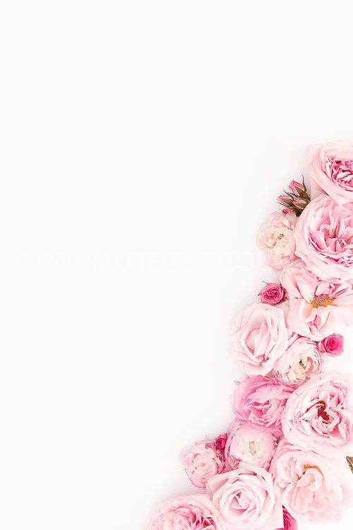 Beautiful Pink and Red Styled Stock Photos for Women Entrepreneurs — Haute Stock | Styled Stock Photography