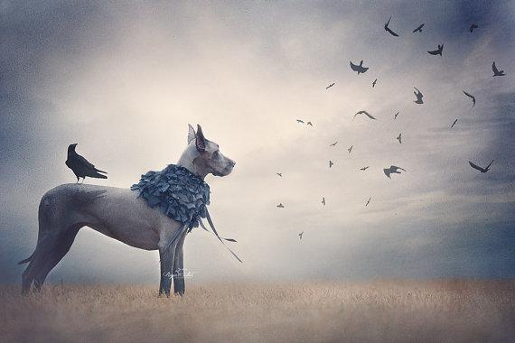 Freya Ever After Dog Photography Great Dane Animal Fine Art