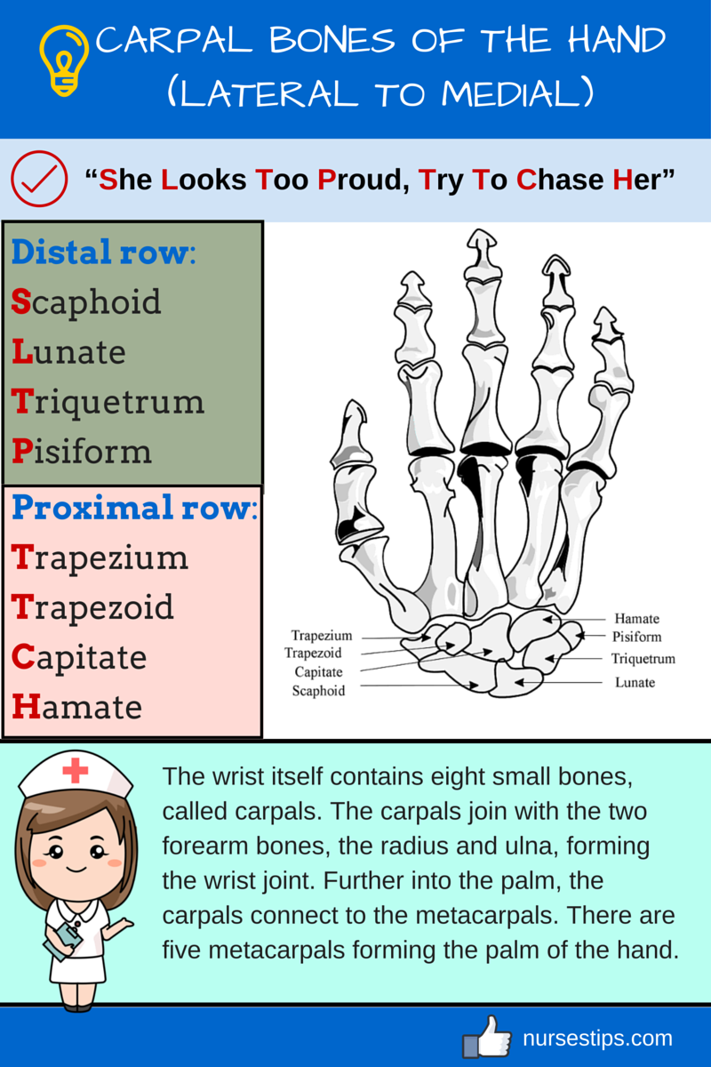 Carpal Bones Of The Hand Lateral To Medial Radiology Pinterest