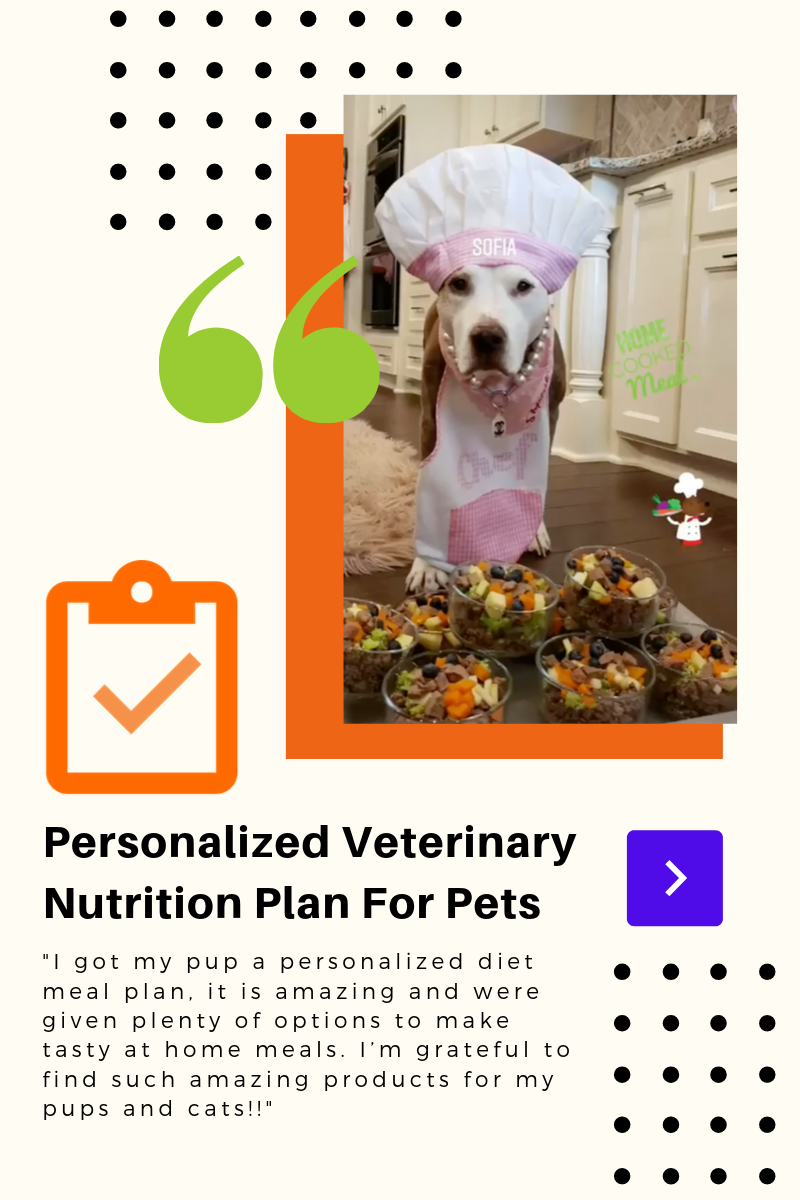 Personalized Veterinary Nutrition Plan For Pets Nutrition Plans