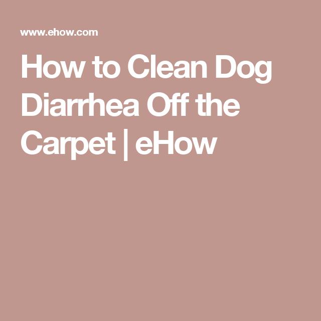 Dog Has Diarrhea On Rug: Clean Dog Diarrhea Off Carpet