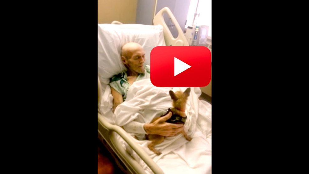 Dying Man's Only Wish Was To See His Dog One Last Time…Would You Help Him?
