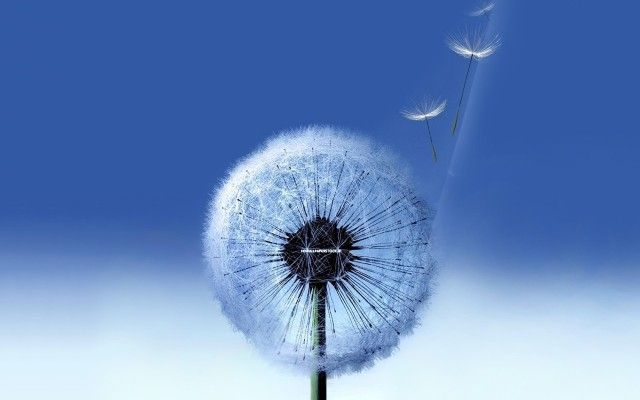 Samsung Hd Wallpapers Galaxy Samsung Wallpaper Hd Galaxy S3 Wallpaper Dandelion Wallpaper