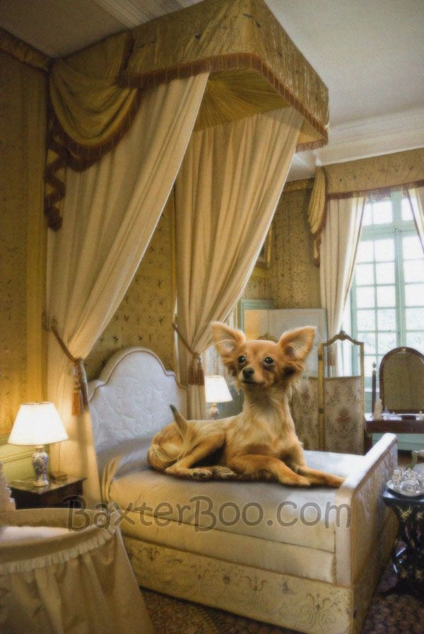 chihuahua dog houses a chihuahua mix relaxing in a luxuriously appointed dog 6317