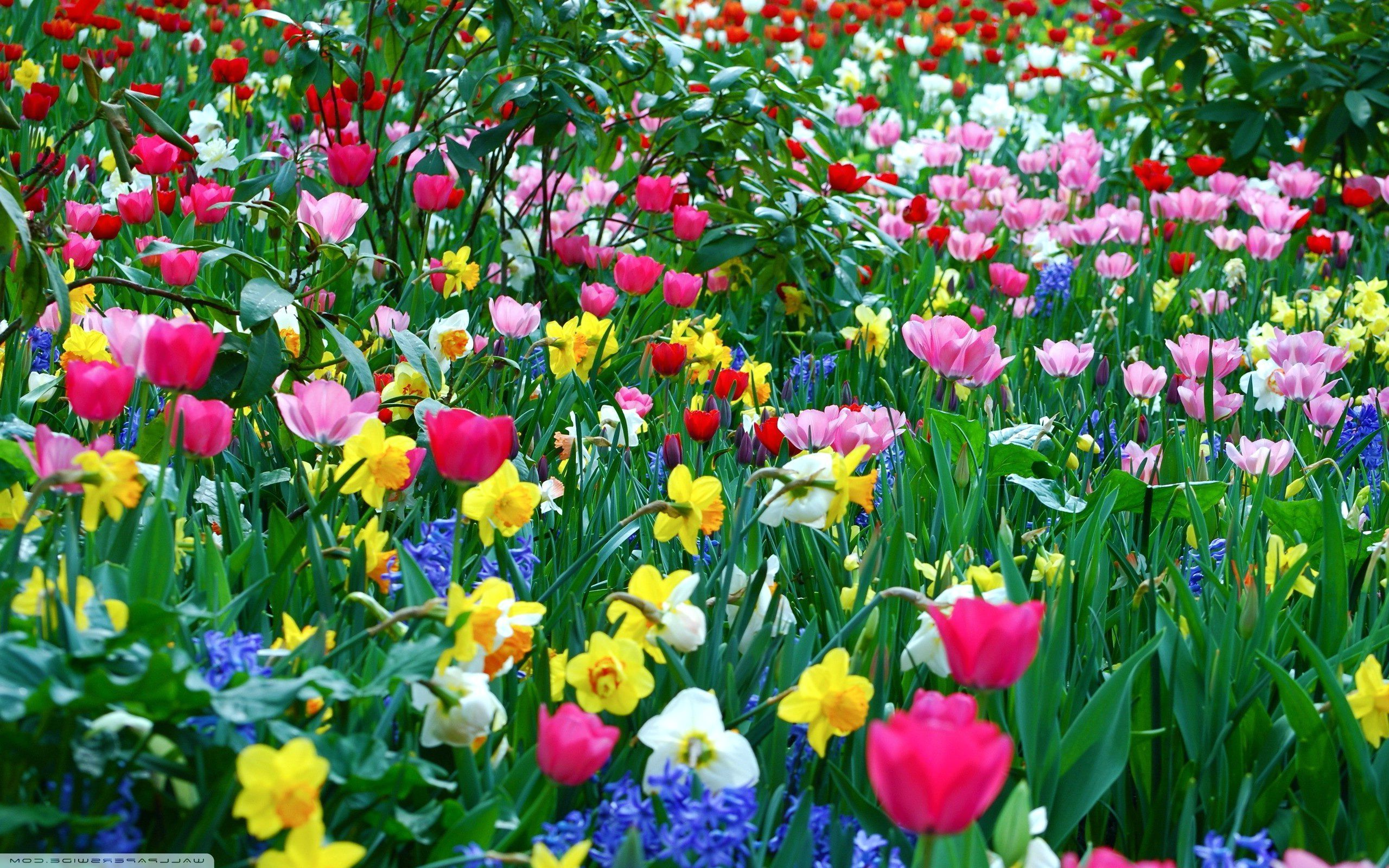 List of synonyms and antonyms of the word natural flowers wallpaper desktop nature flowers mightylinksfo Gallery