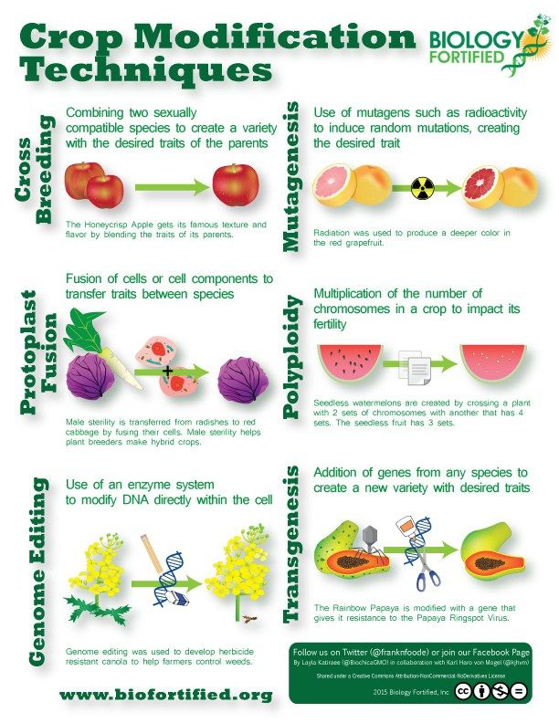 Crop Modification Technique Infographic Biology Fortified Inc Plant Breeding How To Create Infographics Genetically Modified Food Pro And Con Essay