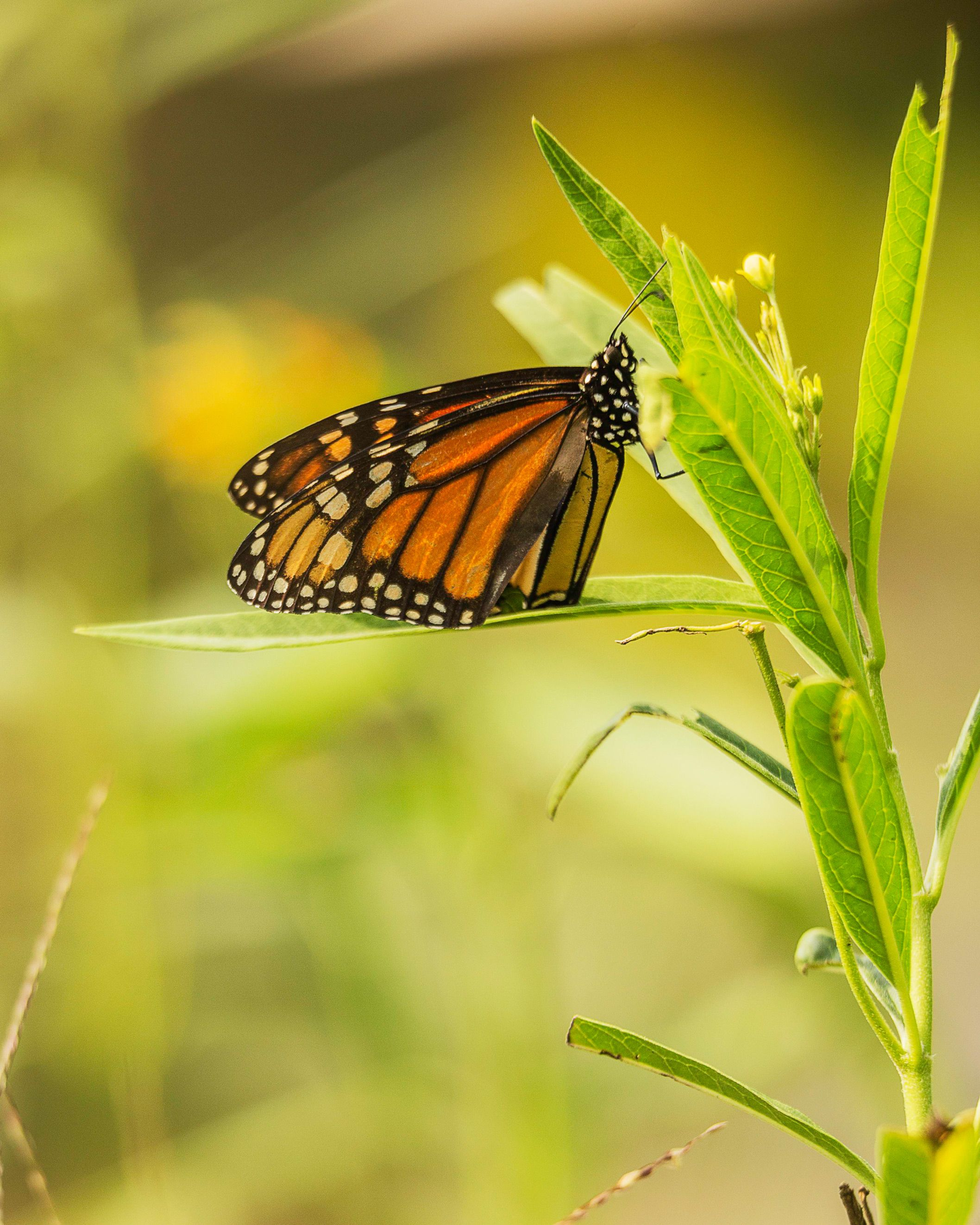 10 Ways To Attract More Butterflies To Your Yard
