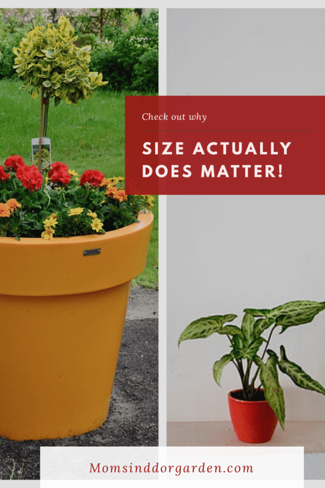 Things To Remember When Planting In Containers Container Garden