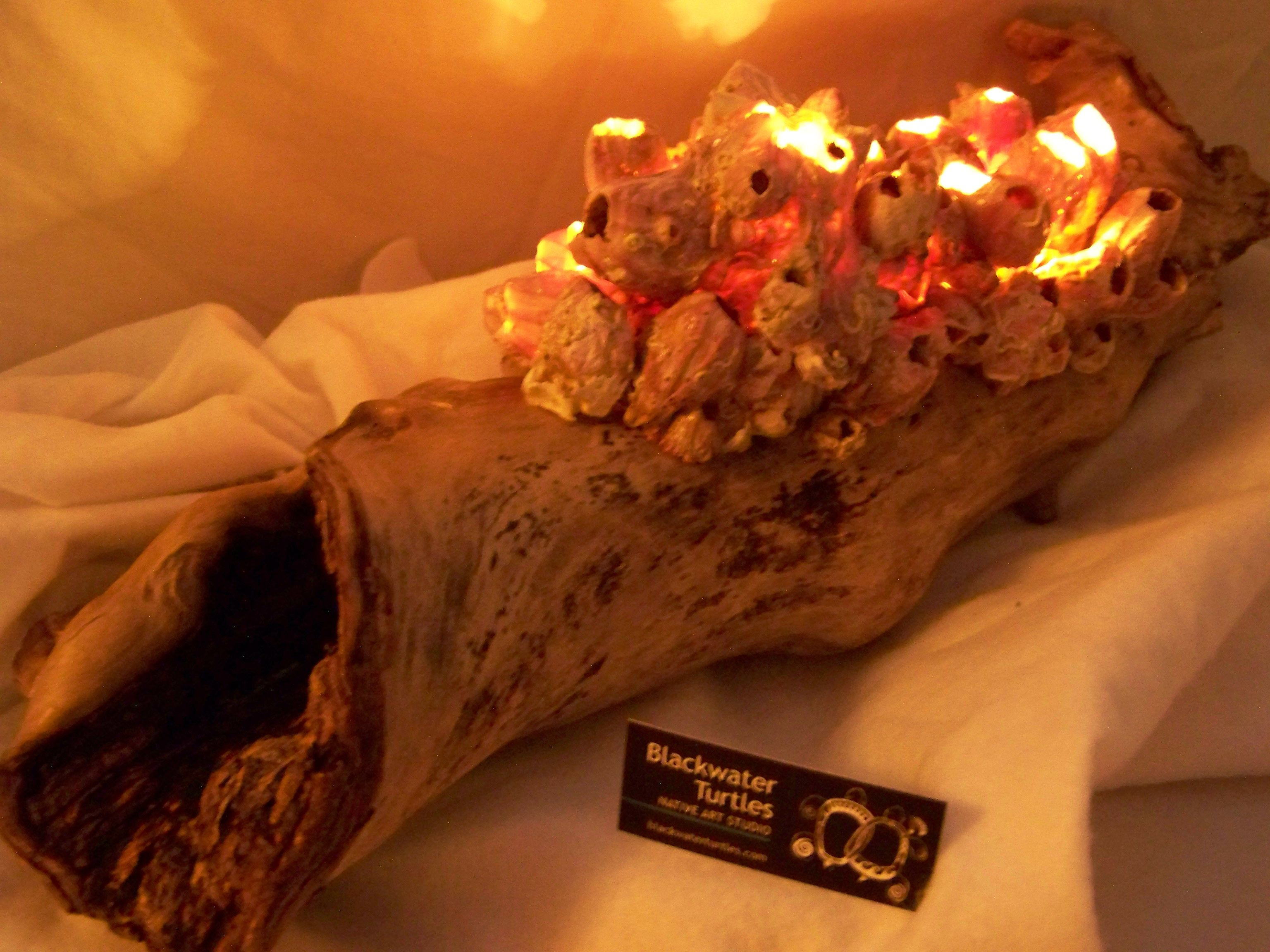 Electric plug in table lamp made with Titan Acorn Barnacles from the Gulf of Mexico