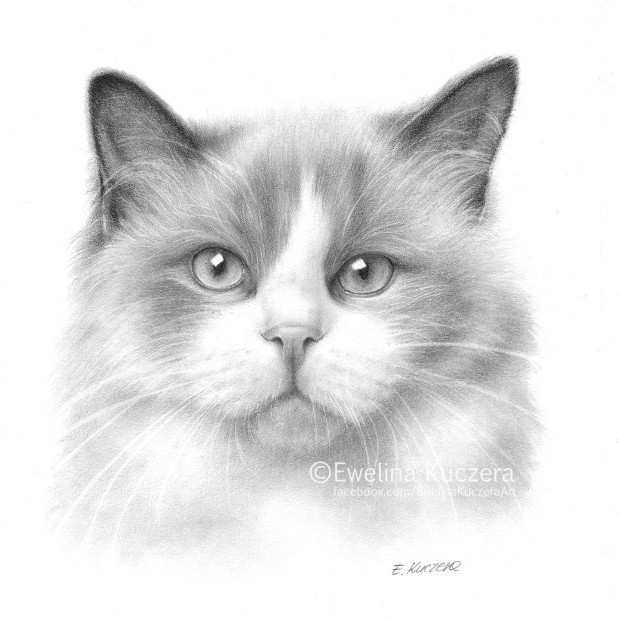 Cat Pencil Drawing By Kot Filemon On Deviantart Animal Drawings Pencil Drawings Drawings