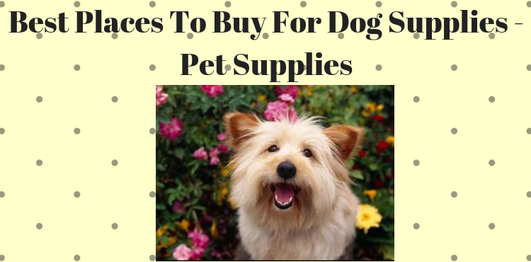 Best Places To Buy For Dog Supplies Pet Supplies Pets Care