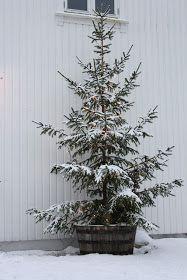 Så kom snøen...som gjør alt så lyst, vakkert og MAGISK....Helt utrolig stemning denne ettermiddagen ute i vår hage.          Her inne ha...