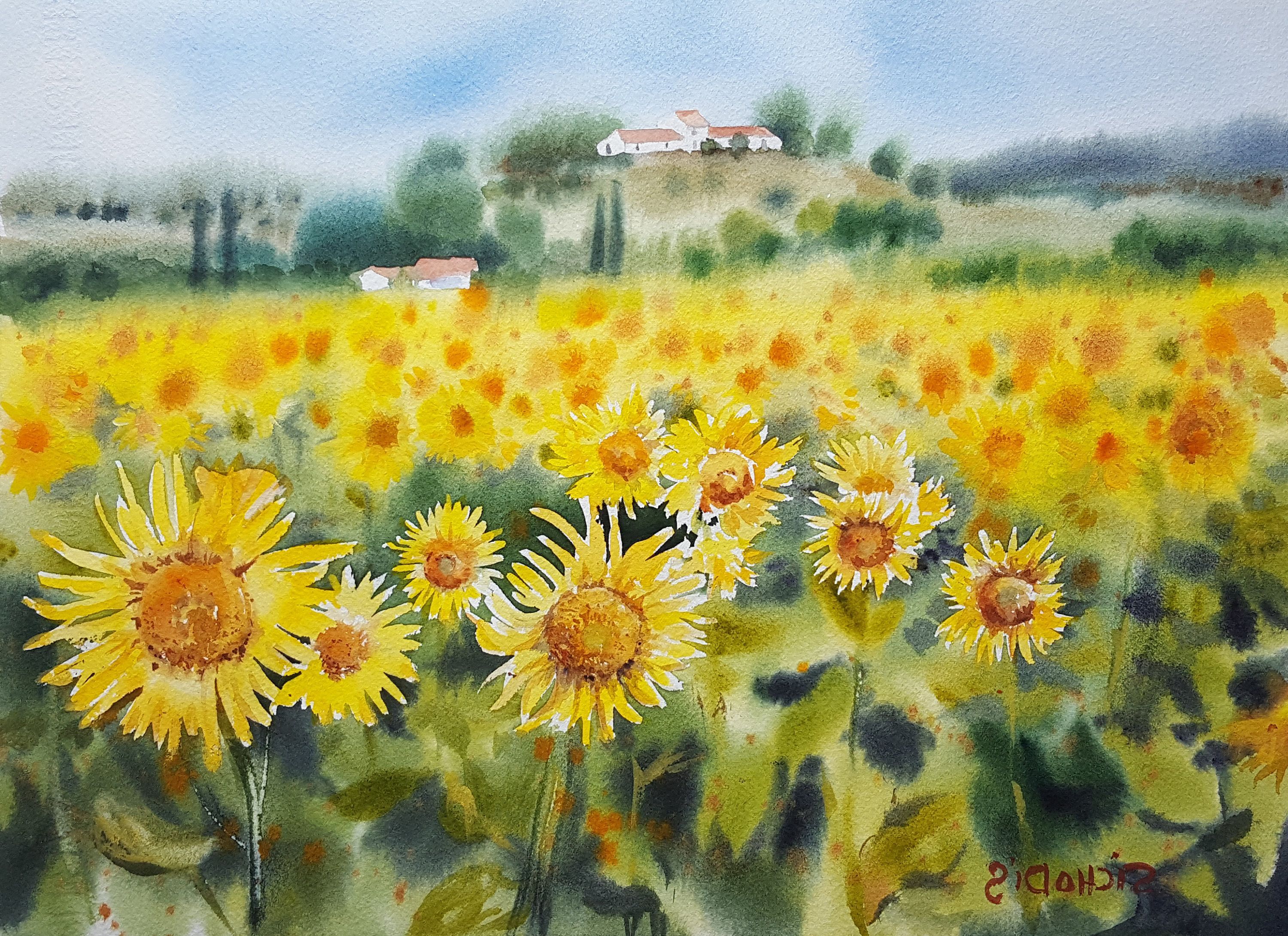 Sunflower Tuscany Original Watercolor Painting 11 X 15 Italy Landscape Yellow Flowers